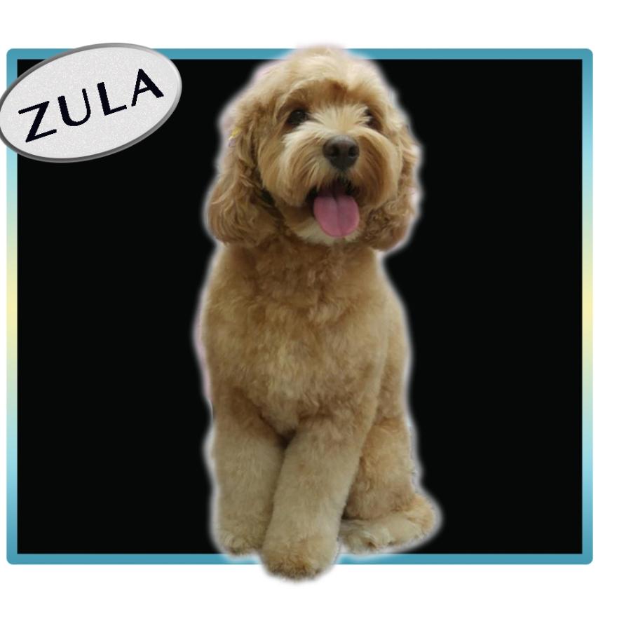 zula_09302016